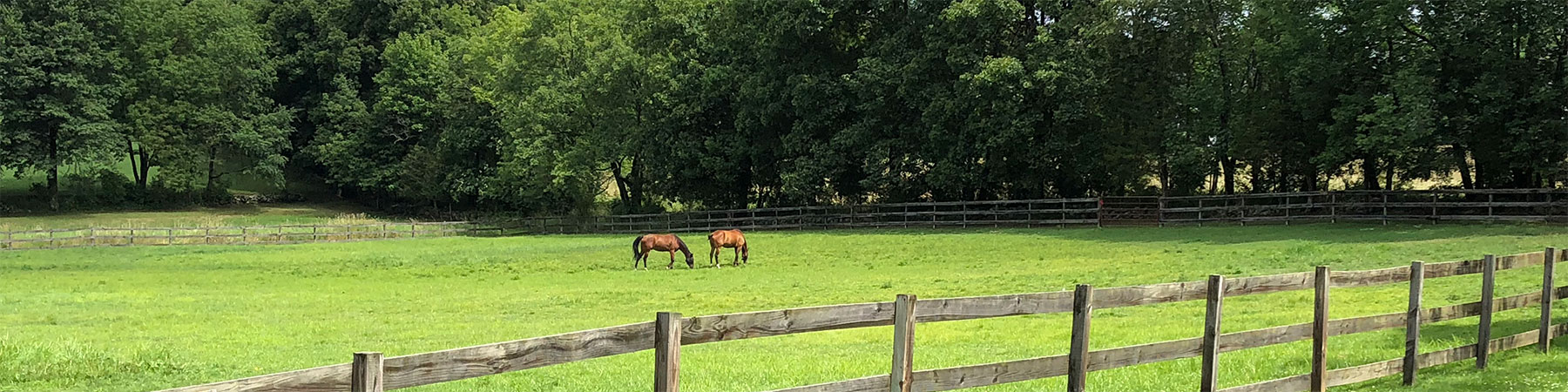 picture of horses in a fenced field in Lafayette.